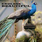Endless Beautiful Free Creative Writing Workshop